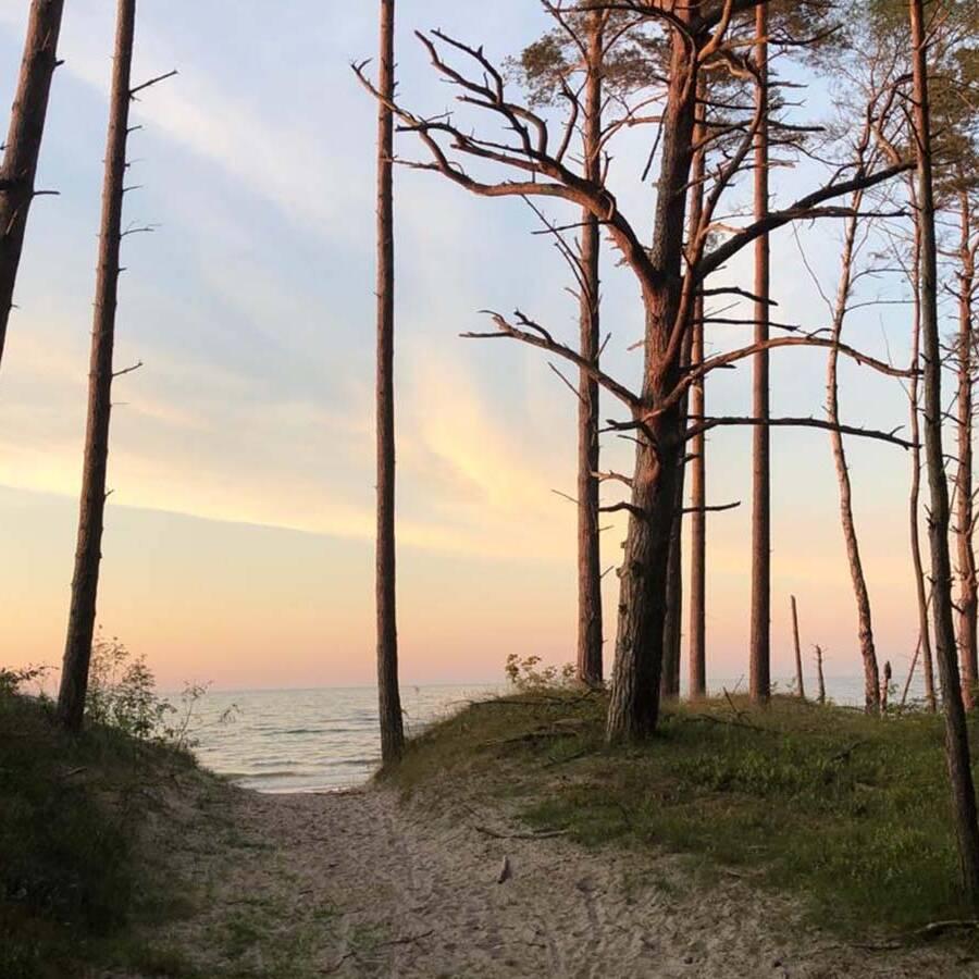 las przy plazy